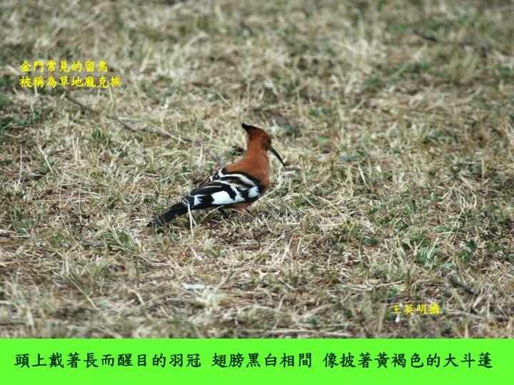 金門常見的留鳥