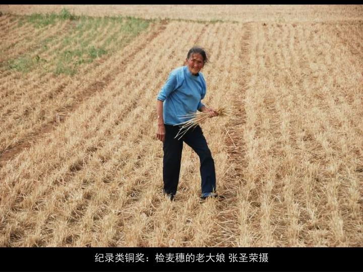 纪录类铜奖:检麦穗的老大娘 张圣荣摄