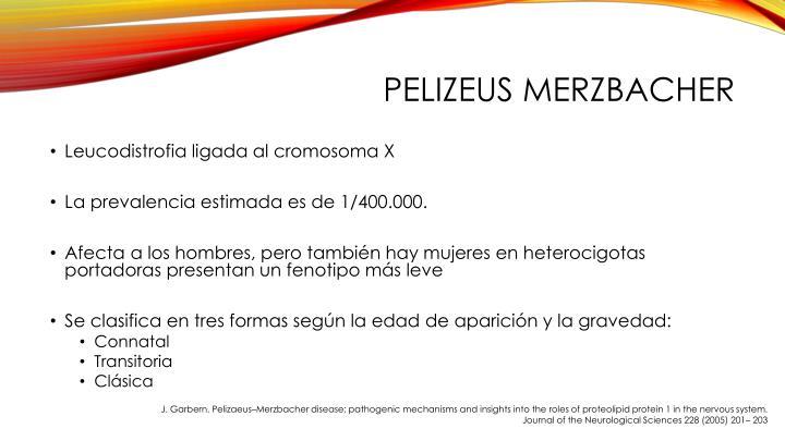 Pelizeus