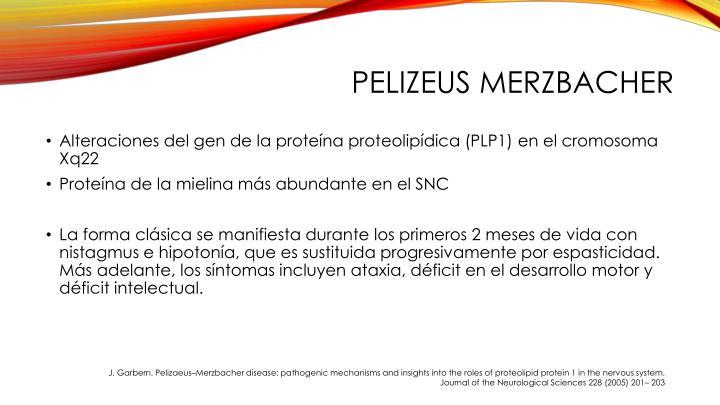 Pelizeus Merzbacher