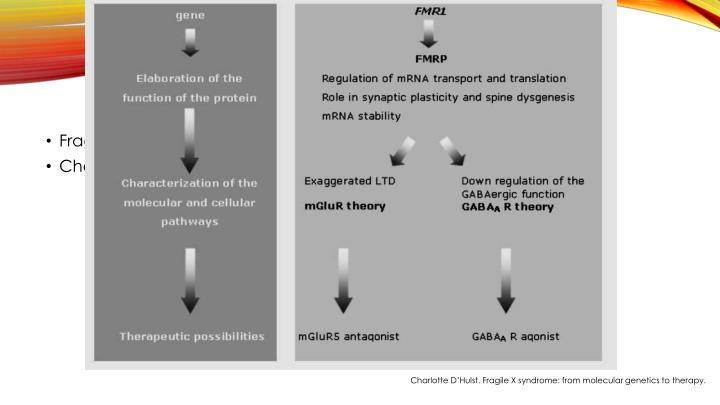 Fragile X syndrome: from molecular genetics to therapy