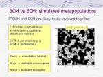 bcm vs ecm simulated metapopulations