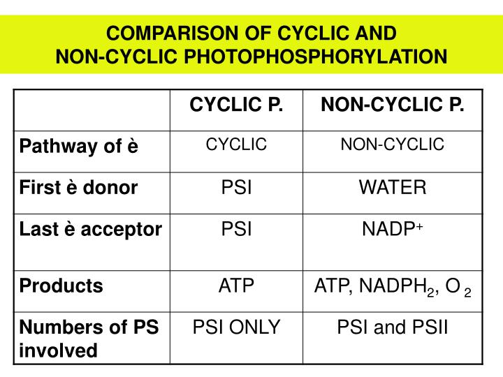 COMPARISON OF CYCLIC AND                                     NON-CYCLIC PHOTOPHOSPHORYLATION