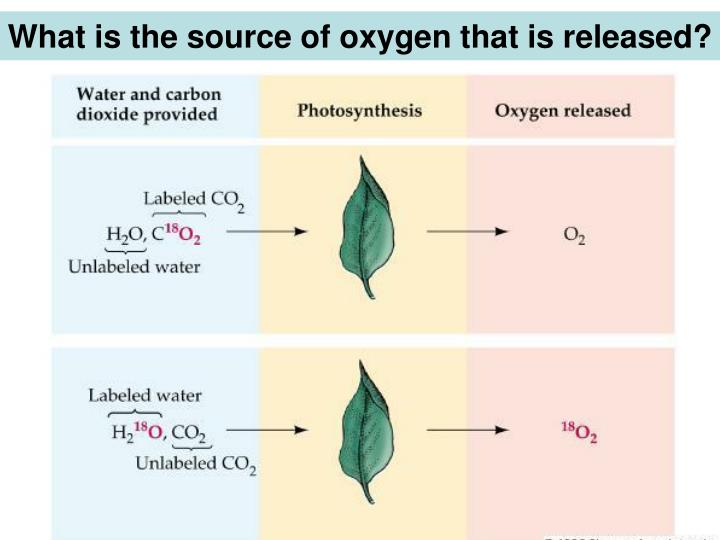 What is the source of oxygen that is released?
