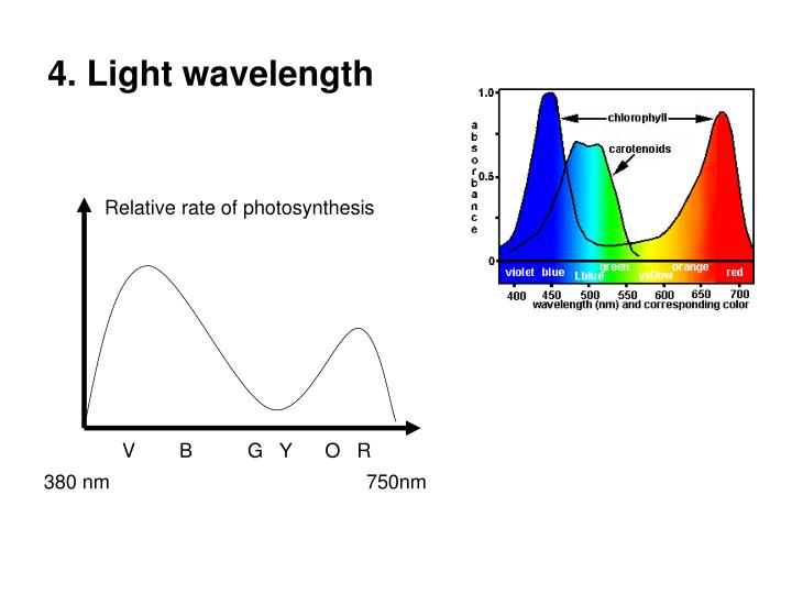 4. Light wavelength