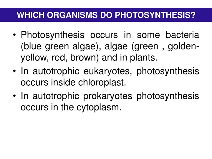 WHICH ORGANISMS DO PHOTOSYNTHESIS?