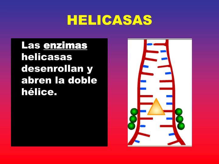 HELICASAS