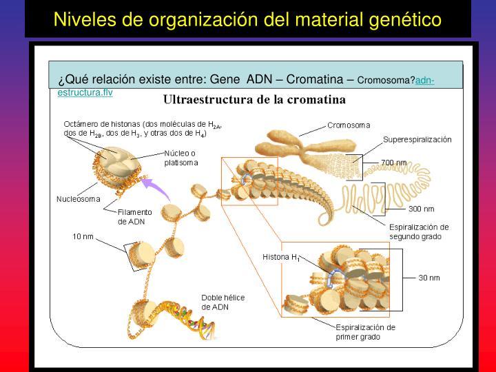 Niveles de organización del material genético