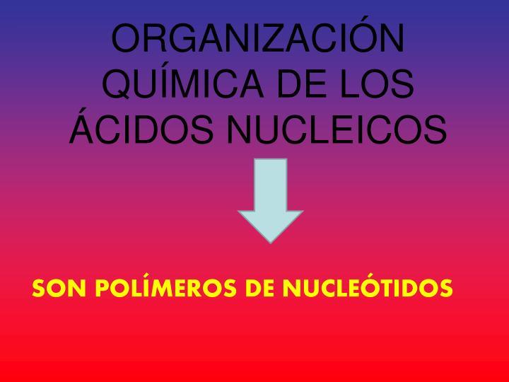 ORGANIZACIÓN QUÍMICA DE LOS ÁCIDOS NUCLEICOS