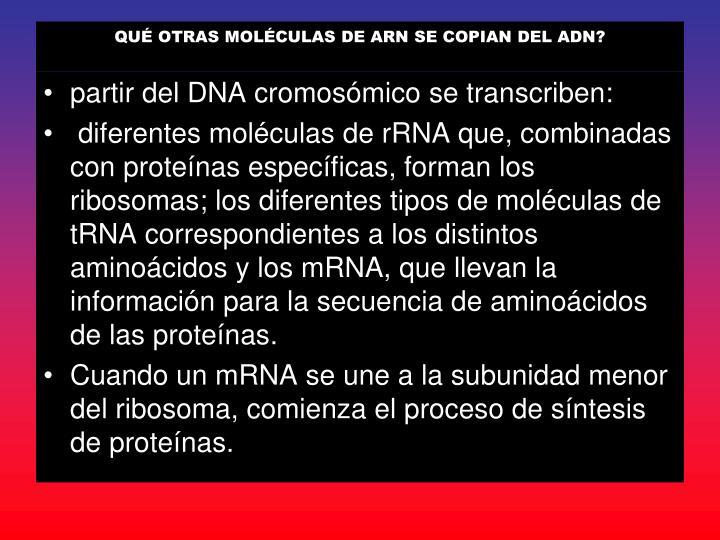 QUÉ OTRAS MOLÉCULAS DE ARN SE COPIAN DEL ADN?