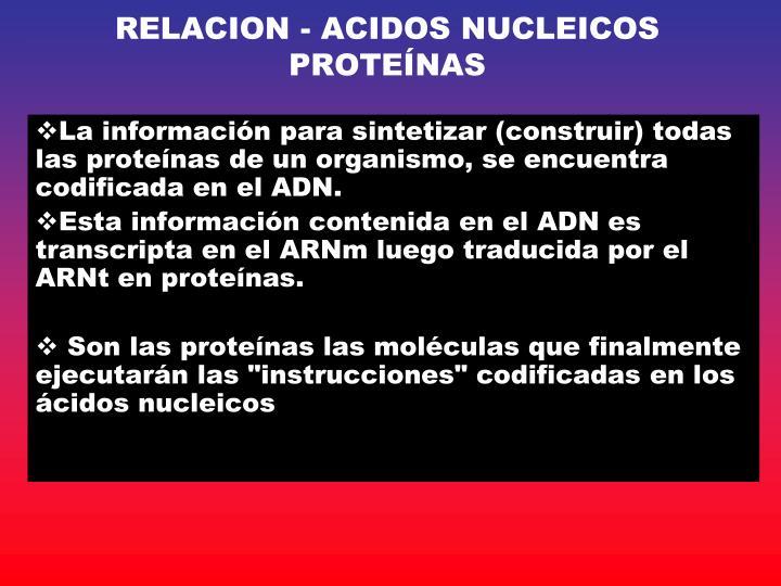 RELACION - ACIDOS NUCLEICOS  PROTEÍNAS