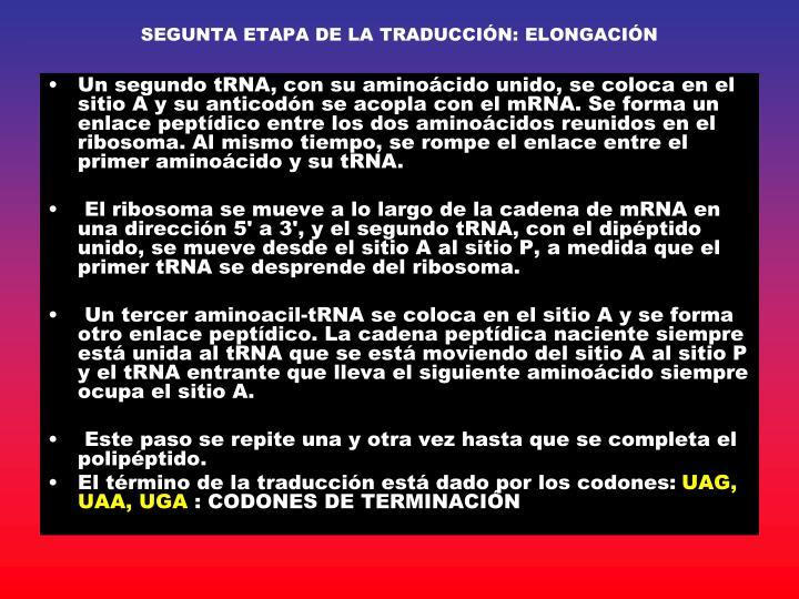 SEGUNTA ETAPA DE LA TRADUCCIÓN: ELONGACIÓN