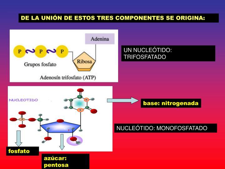 DE LA UNIÓN DE ESTOS TRES COMPONENTES SE ORIGINA: