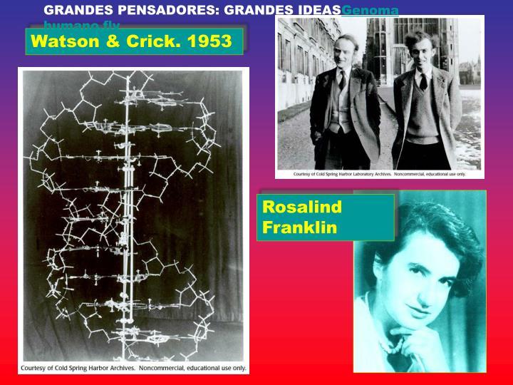 GRANDES PENSADORES: GRANDES IDEAS