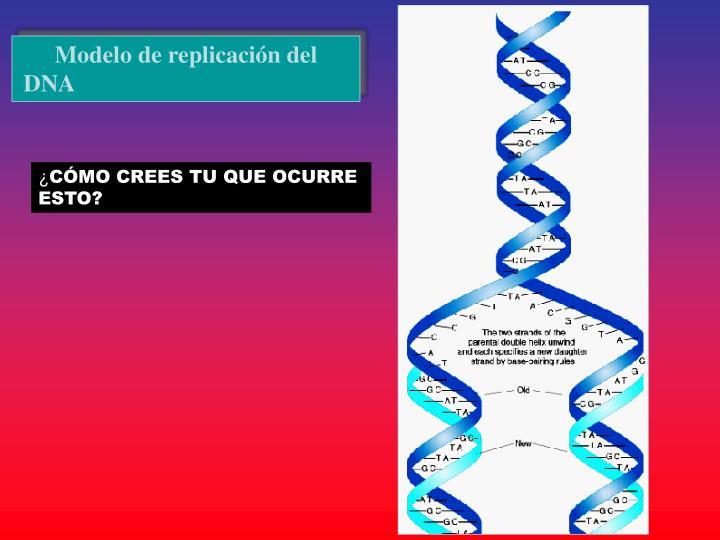 Modelo de replicación del DNA