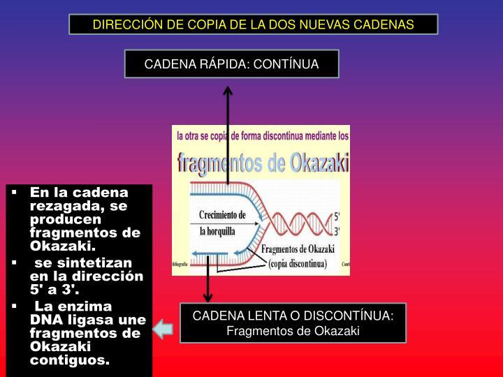 DIRECCIÓN DE COPIA DE LA DOS NUEVAS CADENAS