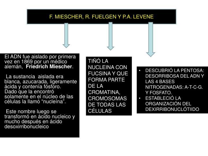 F. MIESCHER, R. FUELGEN Y P.A. LEVENE