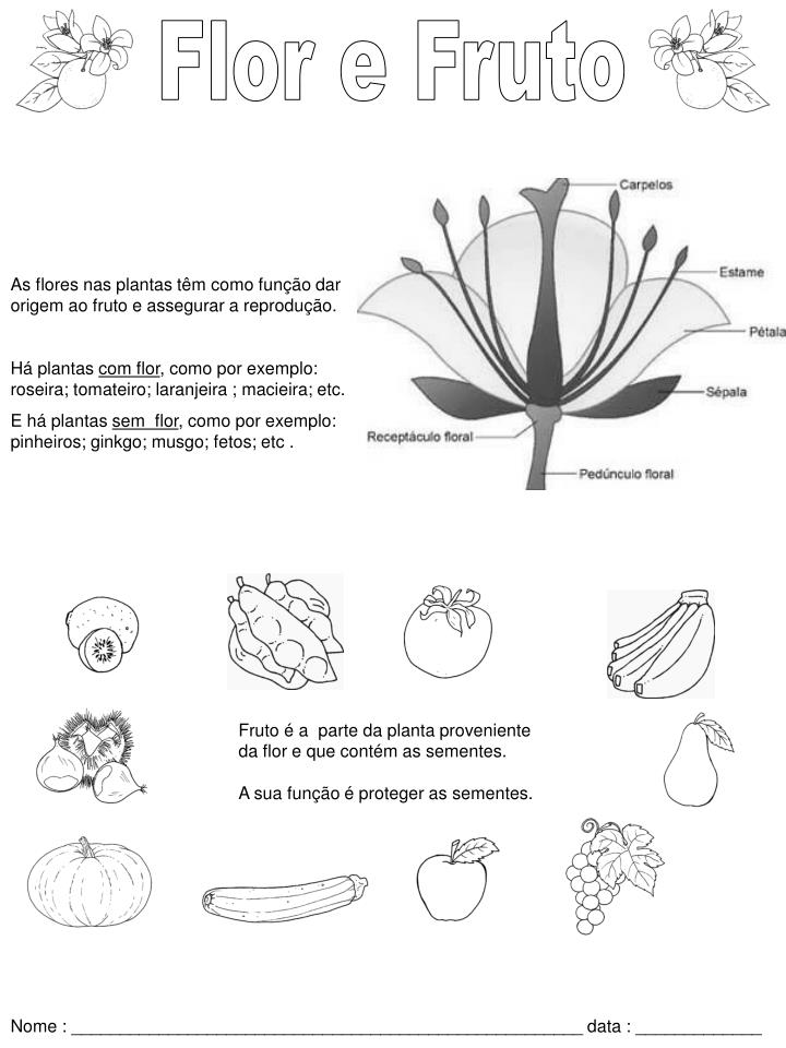 Flor e Fruto