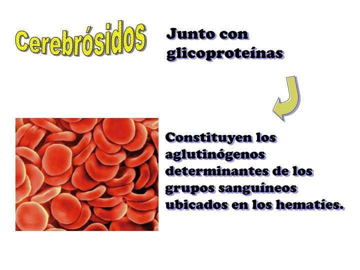 Cerebrósidos