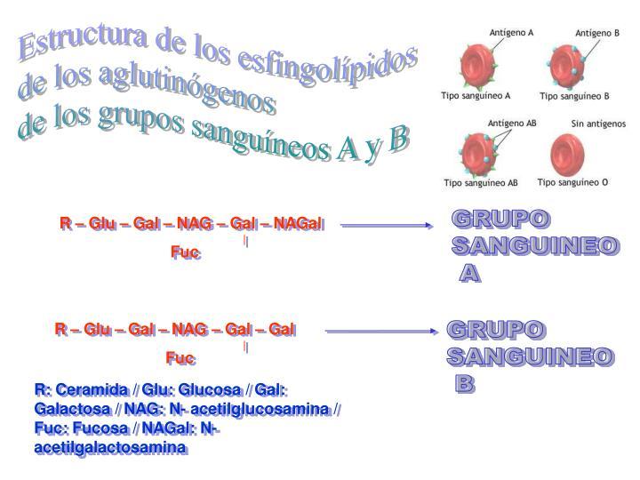 Estructura de los esfingolípidos