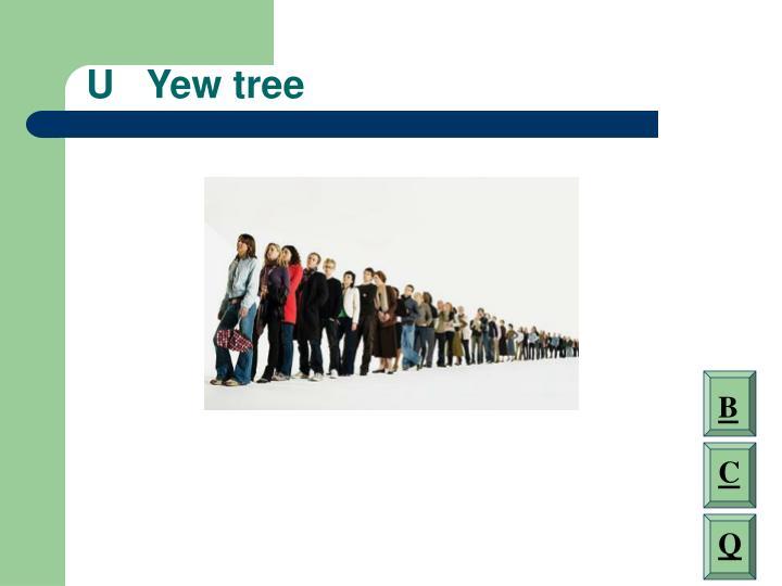 U   Yew tree