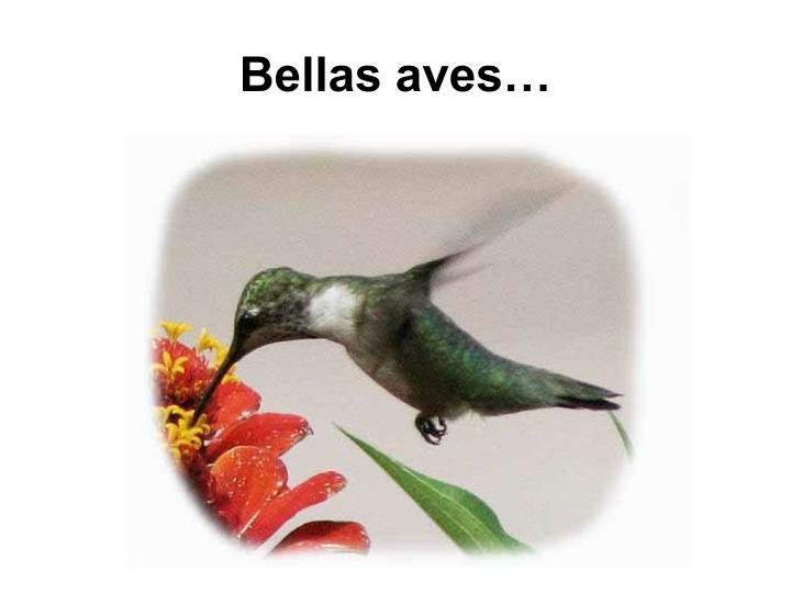 Bellas aves…