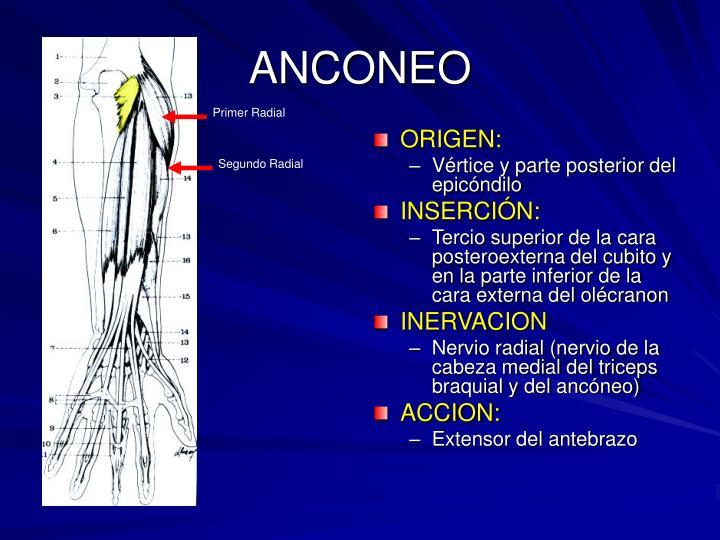 ANCONEO