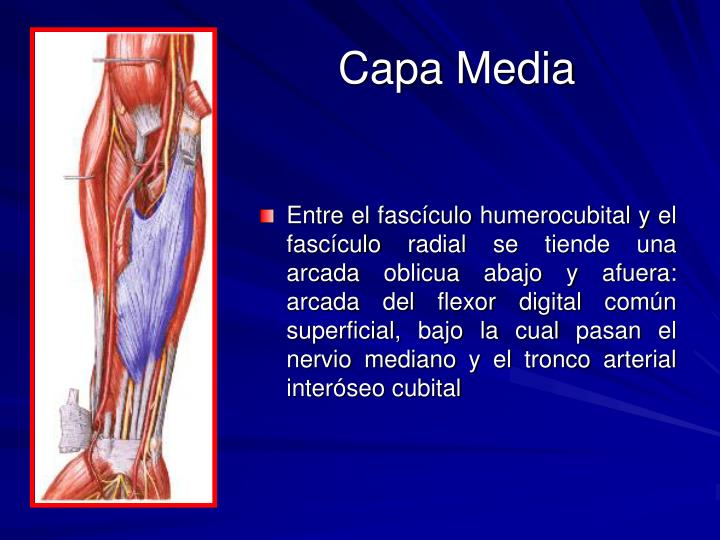 Capa Media