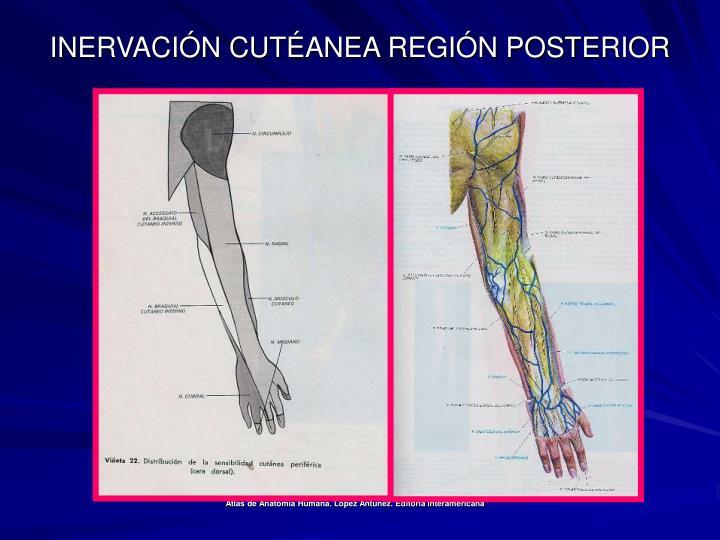 INERVACIÓN CUTÉANEA REGIÓN POSTERIOR