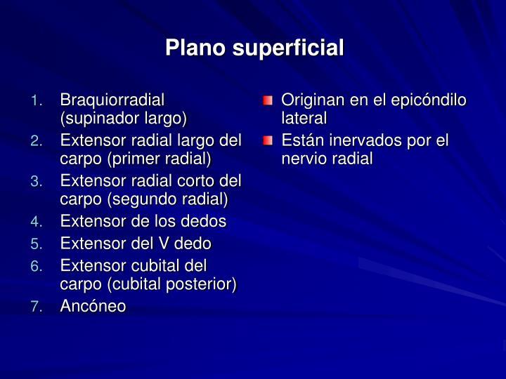 Braquiorradial (supinador largo)