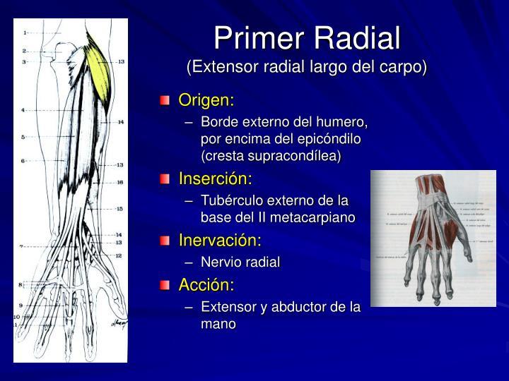 Primer Radial