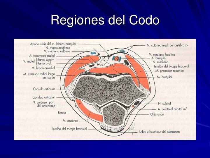 Regiones del Codo