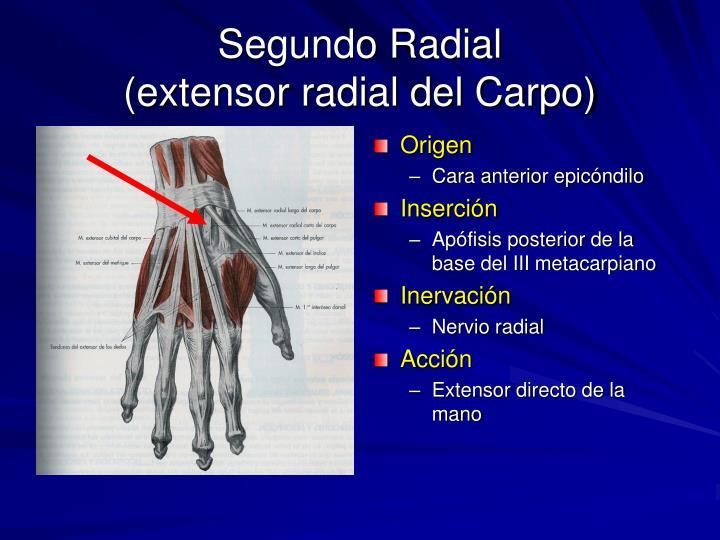 Segundo Radial