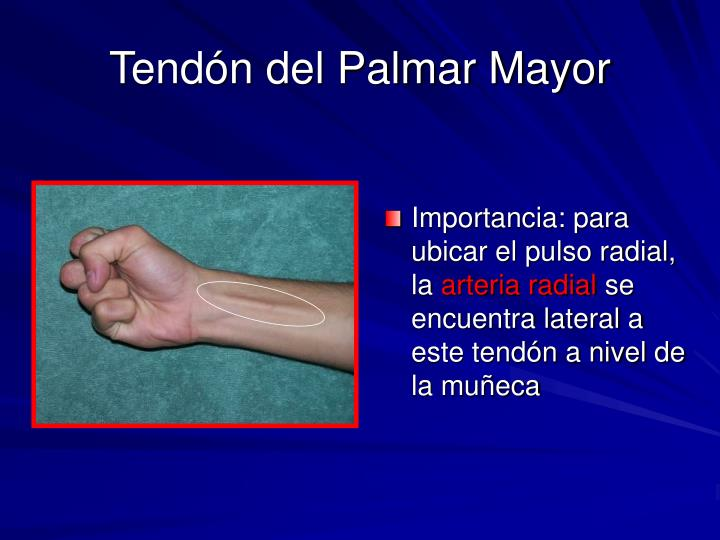 Tendón del Palmar Mayor