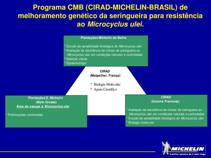 Programa CMB (CIRAD-MICHELIN-BRASIL) de melhoramento genético da seringueira para resistência ao