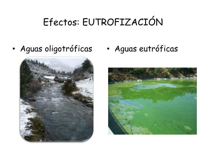 Efectos: EUTROFIZACIÓN