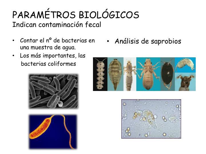 PARAMÉTROS BIOLÓGICOS