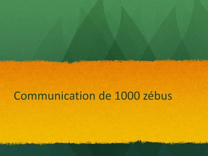 Communication de 1000 zébus