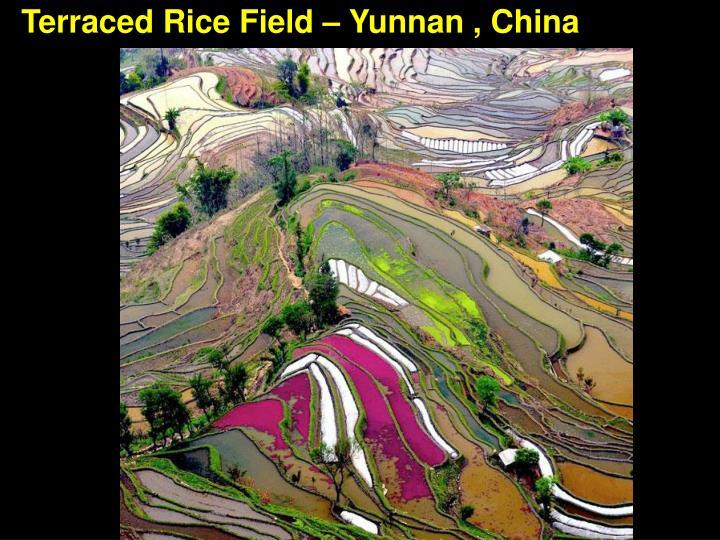 Terraced Rice Field – Yunnan , China