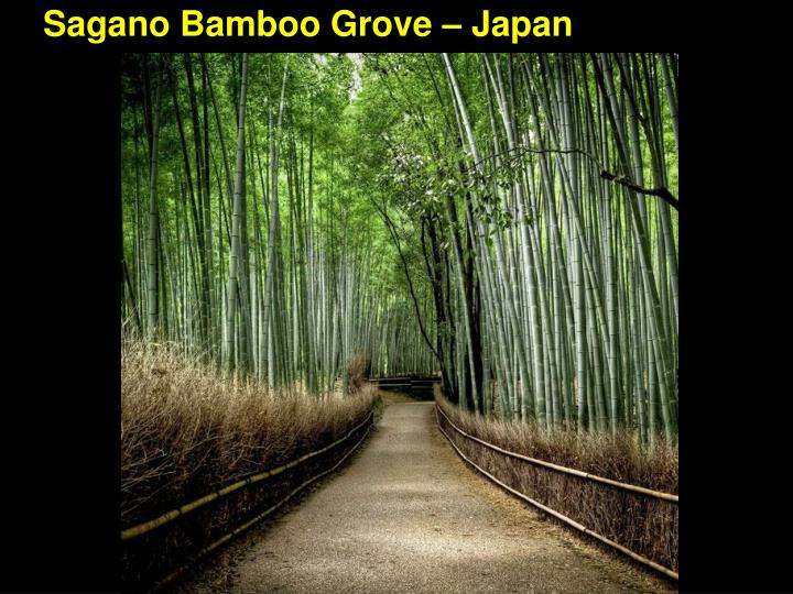 Sagano Bamboo Grove – Japan