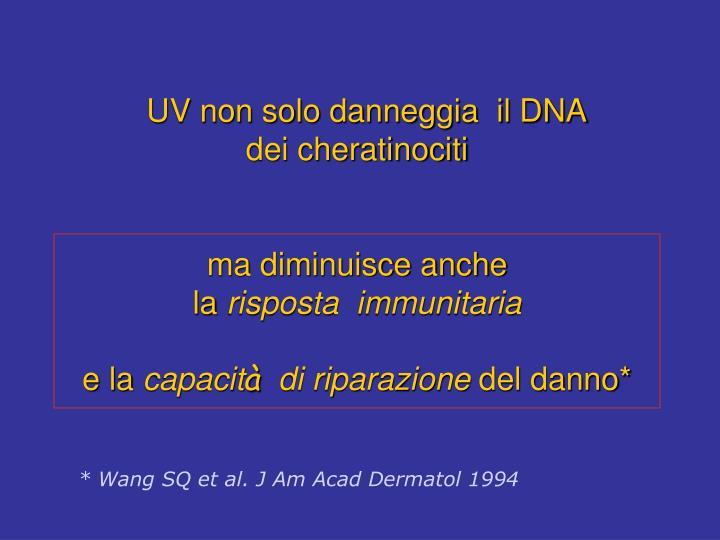 UV non solo danneggia  il DNA