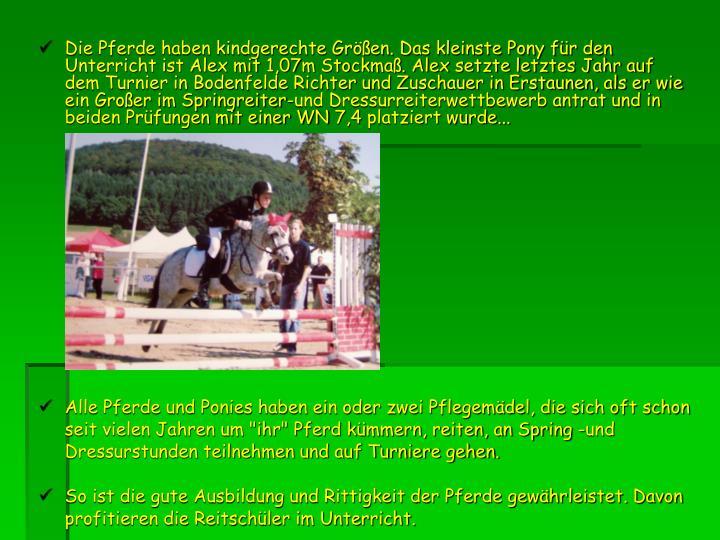 Die Pferde haben kindgerechte Größen. Das kleinste Pony für den Unterricht ist Alex mit 1,07m Stockmaß. Alex setzte letztes Jahr auf dem Turnier in Bodenfelde Richter und Zuschauer in Erstaunen, als er wie ein Großer im Springreiter-und Dressurreiterwettbewerb antrat und in beiden Prüfungen mit einer WN 7,4 platziert wurde...