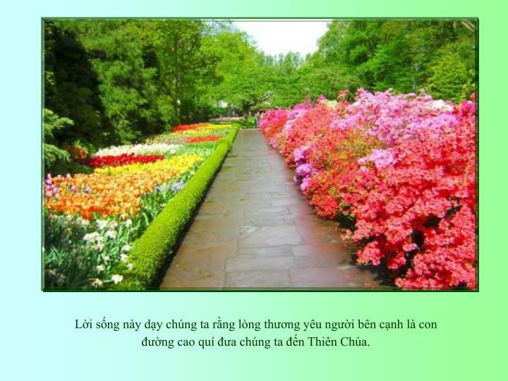 Li sng ny dy chng ta rng lng thng yu ngi bn cnh l con ng cao qu a chng ta n Thin Cha.