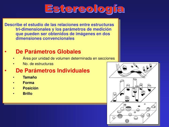 Estereología