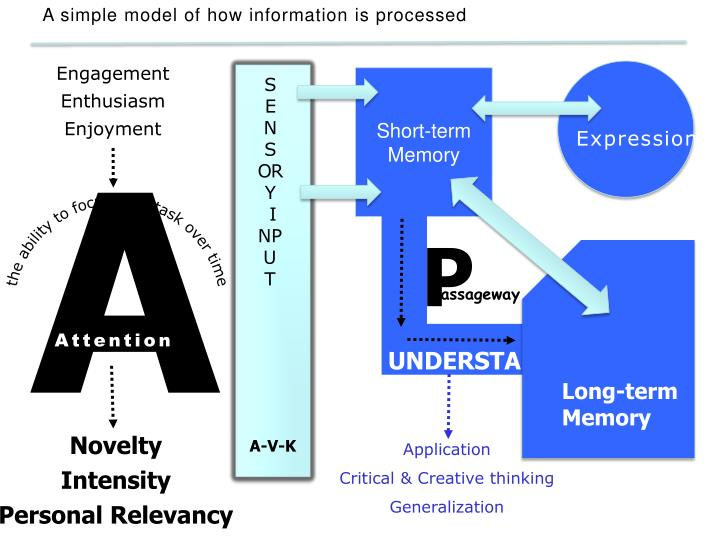 A simple model of how information is processed