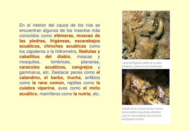 En el interior del cauce de los ríos se encuentran algunos de los insectos más conocidos como