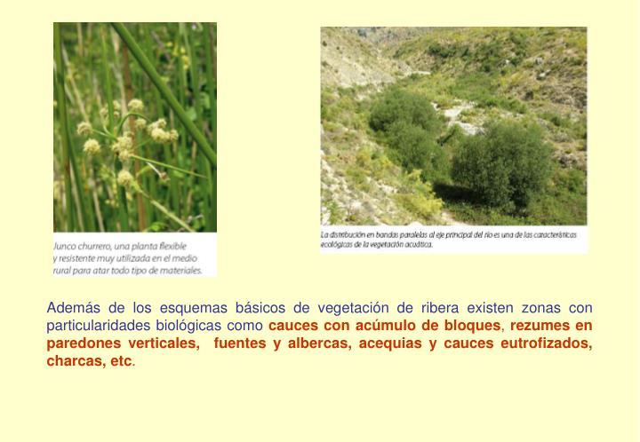 Además de los esquemas básicos de vegetación de ribera existen zonas con particularidades biológicas como