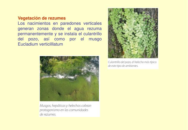 Vegetación de rezumes