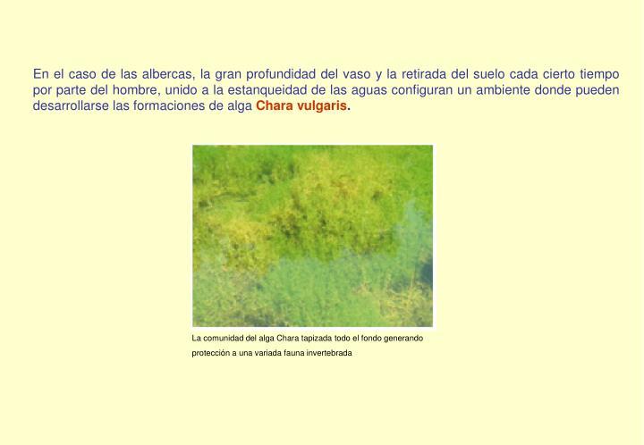 En el caso de las albercas, la gran profundidad del vaso y la retirada del suelo cada cierto tiempo por parte del hombre, unido a la estanqueidad de las aguas configuran un ambiente donde pueden desarrollarse las formaciones de alga