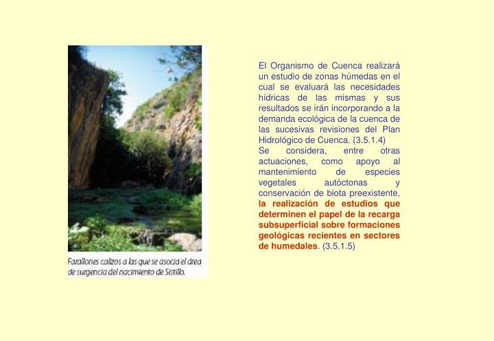 El Organismo de Cuenca realizará un estudio de zonas húmedas en el cual se evaluará las necesidades hídricas de las mismas y sus resultados se irán incorporando a la demanda ecológica de la cuenca de las sucesivas revisiones del Plan Hidrológico de Cuenca. (3.5.1.4)